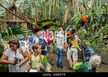 Visitors feeding tame rainbow lorikeets / Swainson's Lorikeet (Trichoglossus moluccanus) by hand in Planckendael - Stock Photo