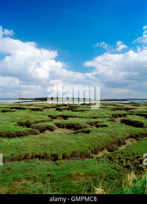 Site of the Battle of Maldon, fought August 991 between East Saxons & Viking raiders, on the shore & salt marshes - Stock Photo