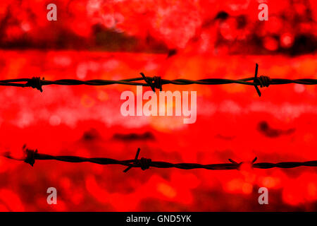 Barbed wire silhouetted against a red background - Stock Photo