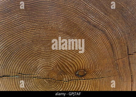 Tree Rings - A Measure of Time - Stock Photo