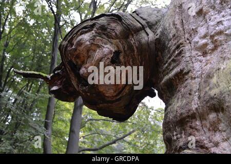 Treeface - Stock Photo