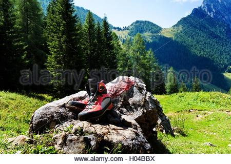 BLWX022452 [ (c) blickwinkel/McPHOTOx/Erwin Wodicka Tel. +49 (0)2302-2793220, E-mail: info@blickwinkel.de, Internet: - Stock Photo