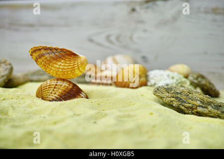 Shells and stones on the yelllow sand - Stock Photo