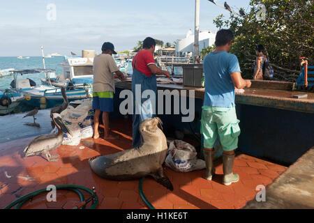 Local Fish Market, Puerto Ayora, Santa Cruz Island, Galapagos, Ecuador - Stock Photo
