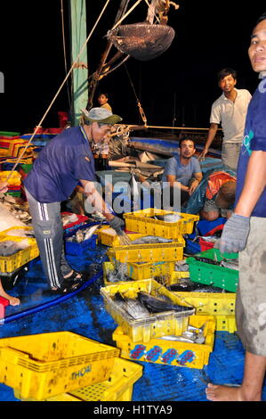 Nha Trang, Vietnam – February 21, 2013: Fishes are being collected and sorted into baskets before loading onto the - Stock Photo