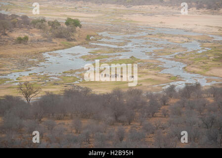 An elephant herd in the middle of the Olifants River - Stock Photo