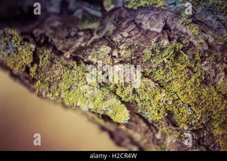 Moss on Tree Trunk - Stock Photo