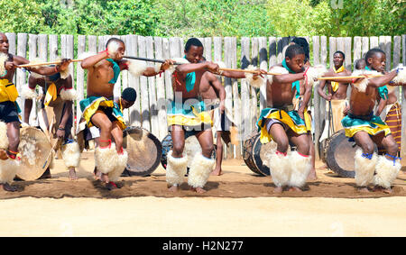 Swazi dance troupe in traditional clothes chanting singing and dancing  The Sibhaca at Mantenga Cultural Village, - Stock Photo
