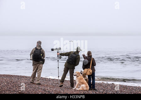 Wildlife photographers and whale watchers spotting bottlenose dolphin at Chanonry Point in the fog, Moray Firth, - Stock Photo