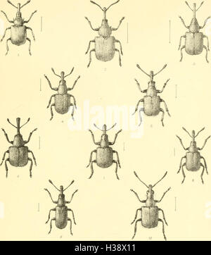 The Coleoptera of the British islands. A descriptive account of the families, genera, and species indigenous to - Stock Photo