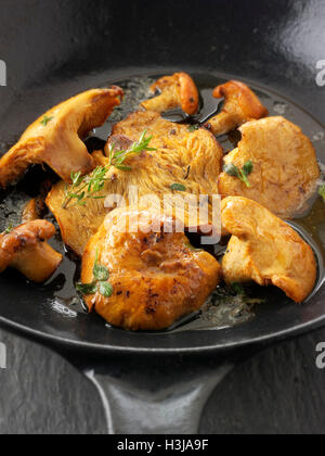 Cooked wiild organic Pied de Mouton Mushrooms (hydnum repandum) or hedgehog mushrooms cooked in butter and herbs - Stock Photo