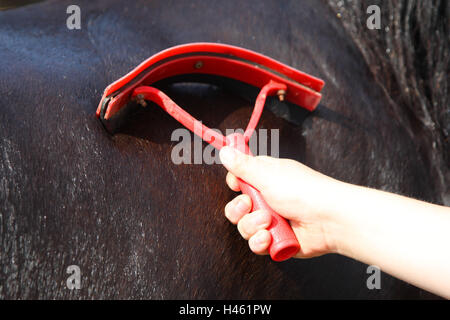Girl maintains horse, - Stock Photo