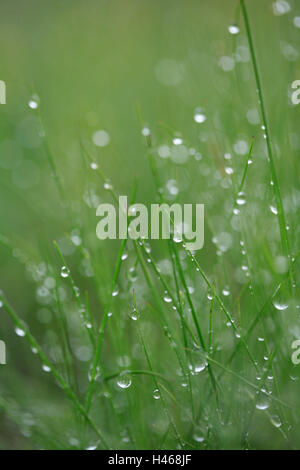 Grass, drops water, nature, meadow, plants, stalks, green, wet, moisture, humidity, damp, freshness, rope, dewdrop, - Stock Photo
