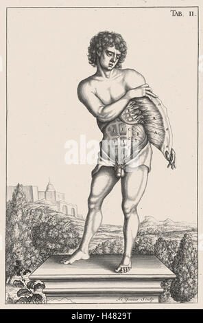 Anatomical illustration showing muscles of the torso - Stock Photo