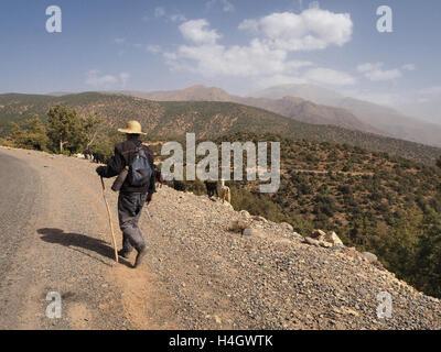 Goat farmer herding along trail in Atlas mountains near Ourika valley - Stock Photo