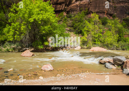 little rapids on Virgin River North Fork in Zion Canyon National Park in Utah USA - Stock Photo