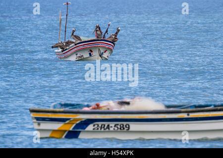 Santa Clara, Panama- June 12: Brown pelicans perched on a small fishing boat. June 12 2016, Santa Clara, Panama. - Stock Photo