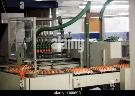 Eggs moving on the production line - Stock Photo
