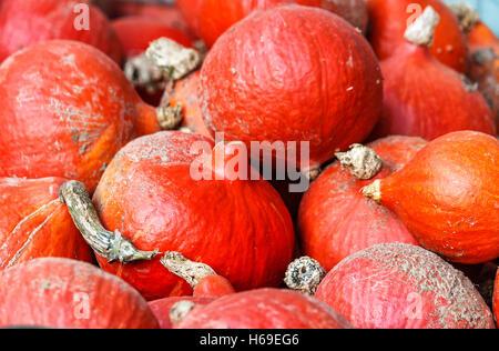 Freshly harvested red kuri squash - Stock Photo