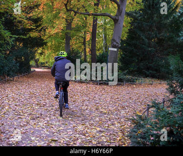 Berlin Tiergarten park. Senior male cyclist on bicycle and autumn leaves on ground and Autumnal trees - Stock Photo