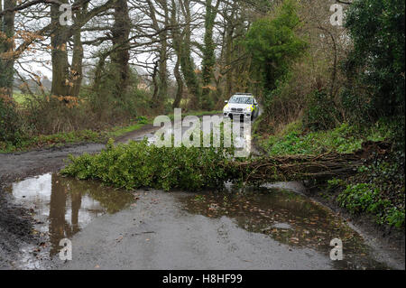 Fallen tree blown over by high winds and approaching police car - Stock Photo