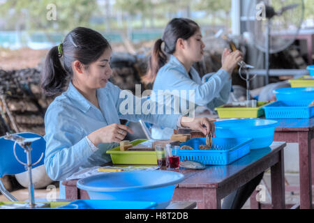 Vietnamese girls working in a pearl farm at Halong Bay, Vietnam, Indochina, Asia - Stock Photo