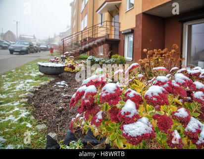 flowers covered with snow near the appartment house on winter day - Stock Photo