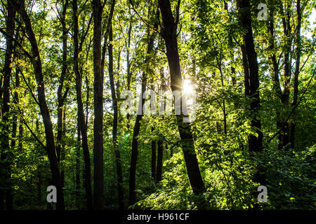 woods forest. trees background. green nature landscape. wilderness - Stock Photo