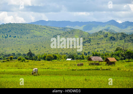 Typical rural landscape in Myanmar with traditional bamboo huts and blue deep sky - Stock Photo