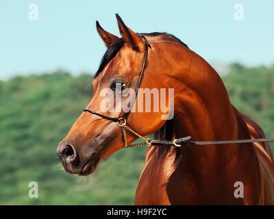 OLYMPUS DIGITAL CAMERA - Stock Photo