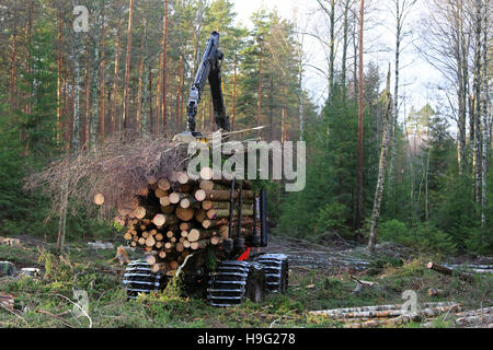 Forestry forwarder stacks up wood on the bunk of the vehicle in forest. - Stock Photo