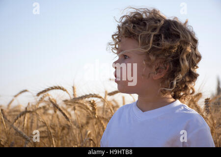 A curly Toddler llooks aside in a wheat field - Stock Photo