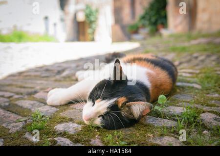 Cute lazy cat sleeping in a city street - Stock Photo