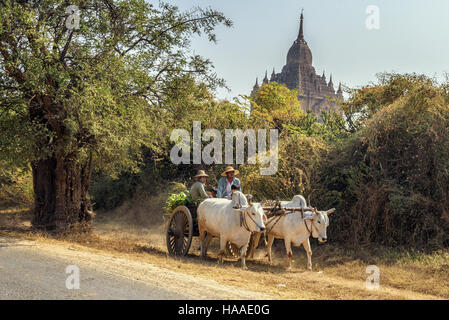 Ox cart carrying burmese family on dusty road around a temple in Bagan - Stock Photo