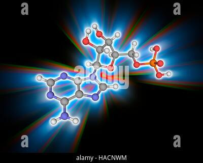 Adenosine monophosphate. Molecular model of the nucleic acid subunit adenosine monophosphate (AMP, C10.H14.N5.O7.P). - Stock Photo