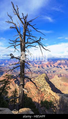 Dry tree above South Rim of Grand Canyon, Arizona, United States - Stock Photo