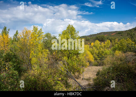 Narrow-leafed Ash, Fraxinus angustifolia, and Poplar groves next to River Jarama, in Tamajon Mountains, Guadalajara - Stock Photo