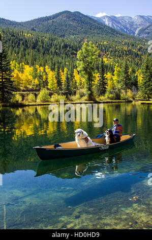 60-ish man paddling a canoe with his emotional support dogs, including a Bernese Mountain Dog and a Great Pyrenees. - Stock Photo