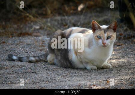 Katze, Ibiza, Spanien. - Stock Photo