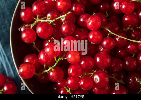 Raw Organic Red Currants in a Bowl - Stock Photo