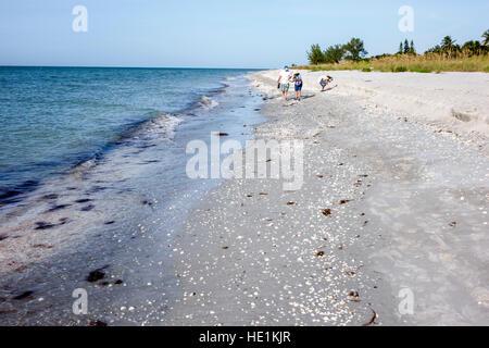 Sanibel Island Florida beach Gulf of Mexico beachcombers shelling shell hunters - Stock Photo