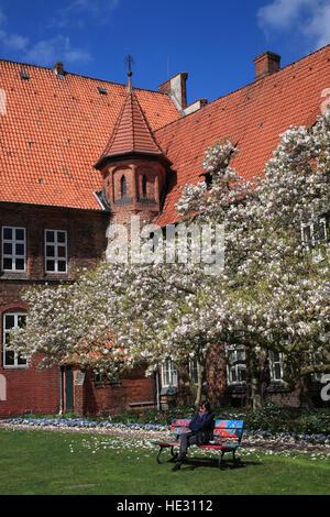 Blooming magnolia tree, town hall garden, Lueneburg, Lüneburg, Germany, Europe - Stock Photo