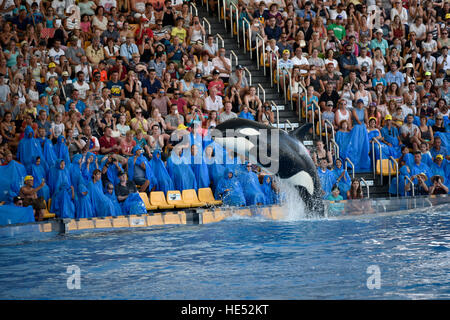 Orca (Orcinus orca) jumping out of the water, Orca show, Loro Parque, Puerto de la Cruz, Tenerife, Canary Islands, - Stock Photo