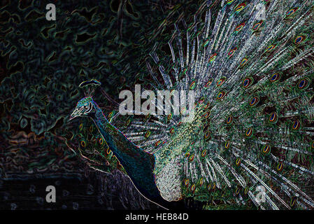 Indian Blue Male Peacock (Pavo cristatus), Tail Feathers in Courtship Display - Digitally Manipulated Image, Abstract - Stock Photo