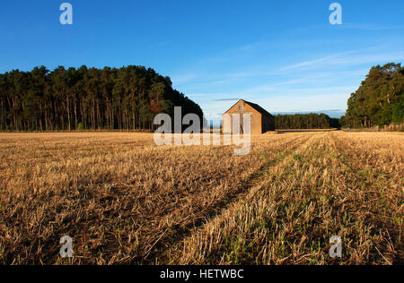 Farmers Store set in the middle of a field of barley stubble in warm autumn sunlight and blue sky with a forest - Stock Photo