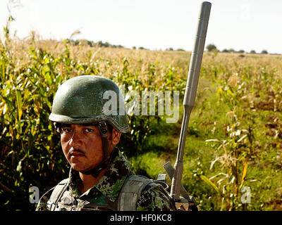 An Afghan National Army soldier walks through a cornfield during a security patrol here, Oct. 19. The ANA has maintained - Stock Photo