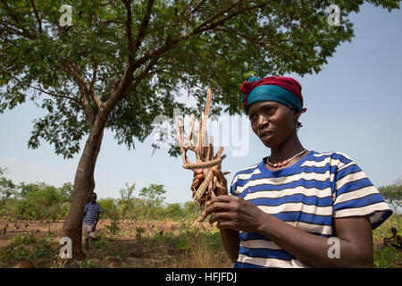 Koumban village, Guinea, 2nd May 2015. Mariama Condé, 35 with 4 children, is cutting néré fruit with her children. - Stock Photo