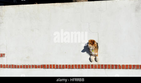 dog peeking through a hole in the wall - Stock Photo