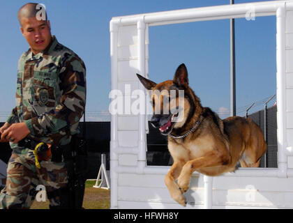 081112-N-0780F-002 SOUDA BAY, Greece (Nov. 12, 2008) Military working dog Laika jumps through a window as her handler - Stock Photo