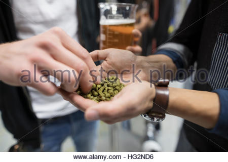 Close up male brewers examining fresh hops in brewery - Stock Photo
